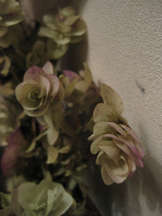 0020111213flower_061_2