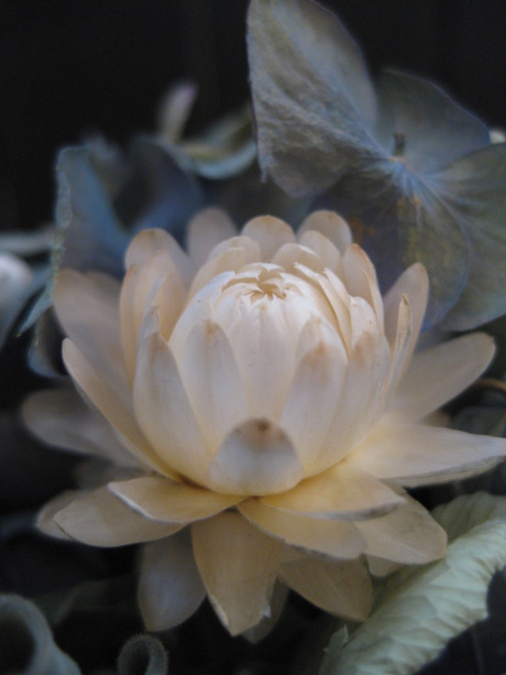 0020120112flower_034