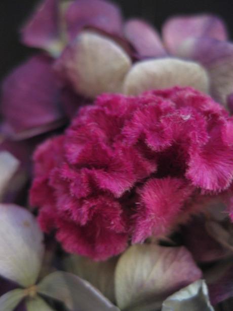 0020120112flower_079