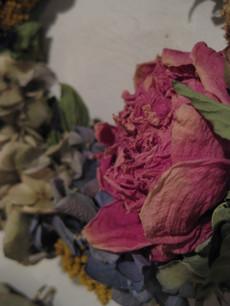 0020121205flower_045